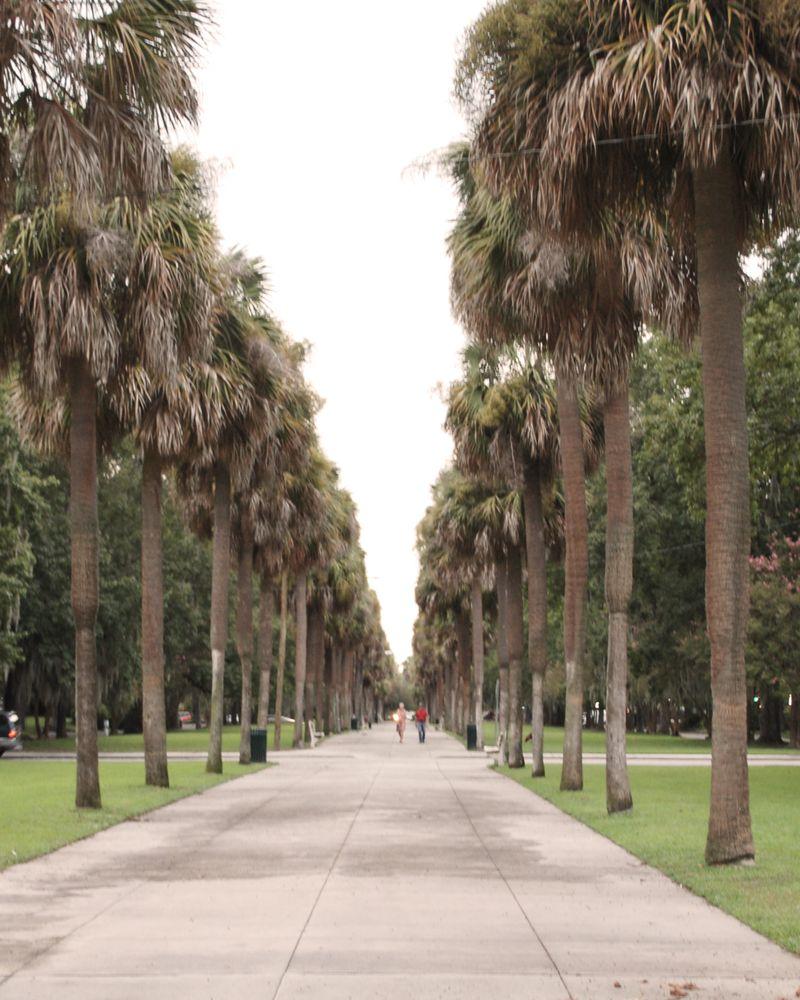 Palmwalk